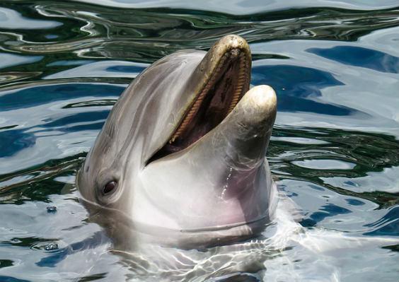 delphin lachend 564