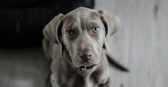 hund blick 564