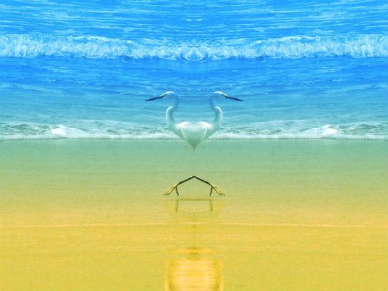 pelikane strand zwei 3k 564