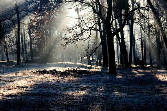 wald mystisch schnee sonne ui 564