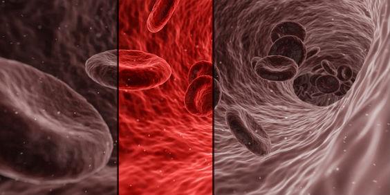 blut rote blutkoerperchen b 564