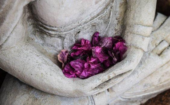 Meditation Pflanzen