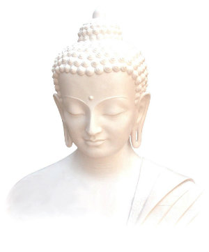 buddha weiss 300