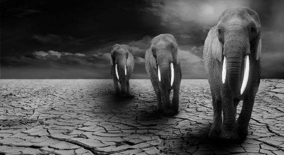 elefanten drei 564