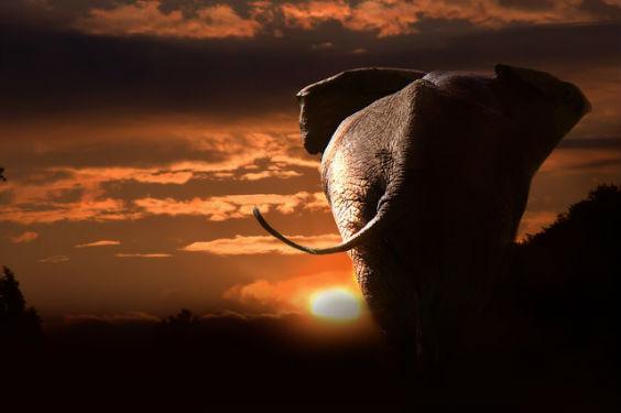 elephant sonnenuntergang 564