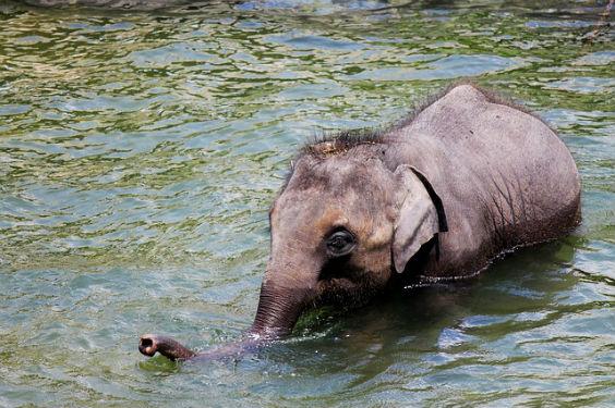 elephant wasser ruessel 9 564