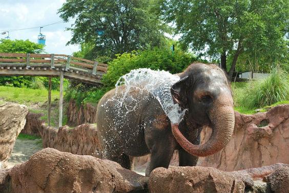 elephant wasser strahl 5h 564