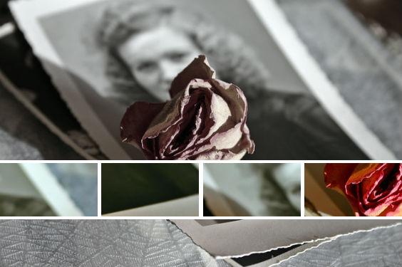 erinnerung rose foto frau 564