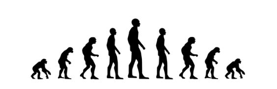 evolution mensch wandel w