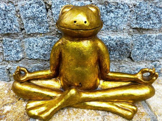 frosch meditation 564