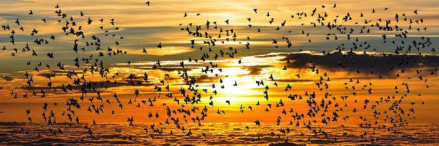 herbst himmel vogelschwarm h 640
