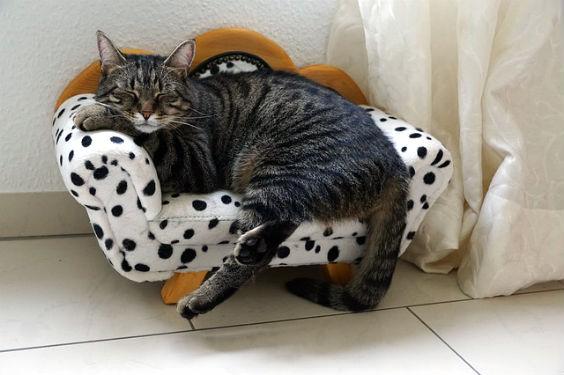 katze gemuetlich sofa ut 564