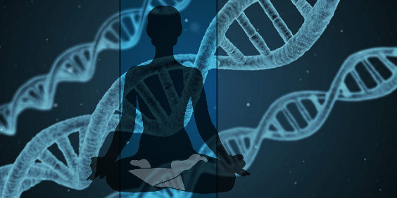 meditation gene chromosomen 564