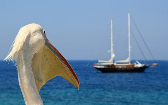 pelikan schiff meer w