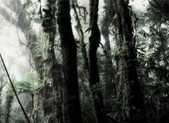 regenwald subtil gruen 5 564