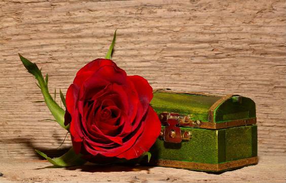 rose ruhe 564