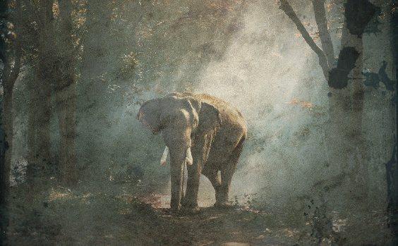 Wald Schrift Natur Elephant