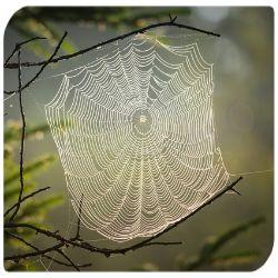 spinnennetz gruen muster ast