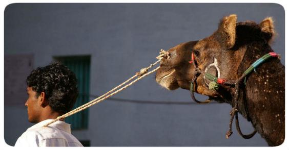 wandel kamel 564