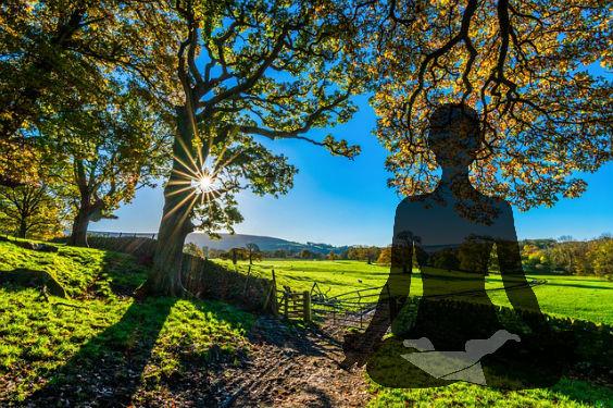 yogi herbst klarheit u 564